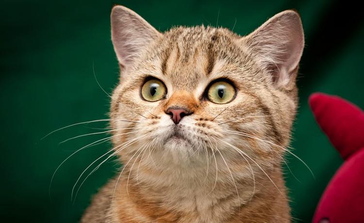 Котик с усами