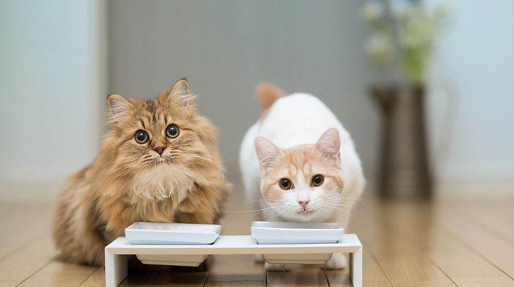 Кошки и кефир