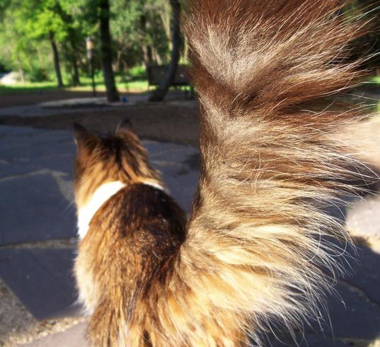 Хвост кота на улице