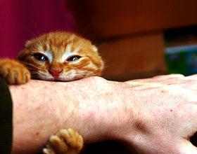 Почему кот кусается когда его гладишь