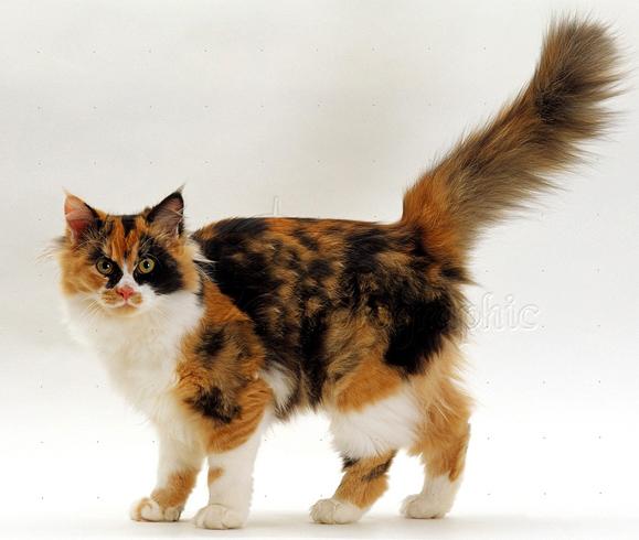 Напряженный кот