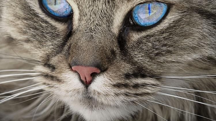 Усы котика