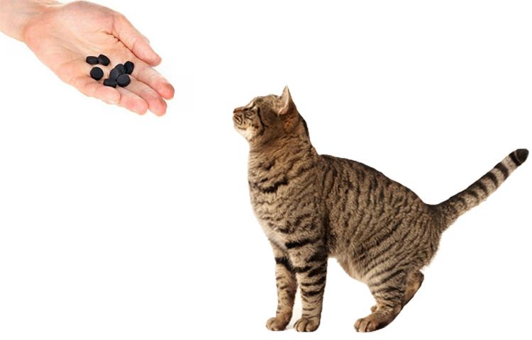 Уголь кошке