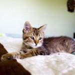Если кот гадит на постель — основные причины и что делать
