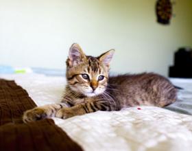 Кот гадит на постель человеку