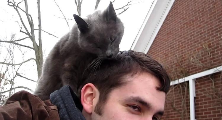 Кот лижет голову хозяина