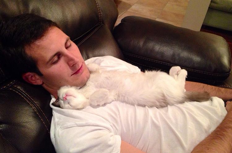 Кошка спит на парне