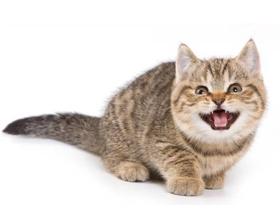 Кот орет без причины