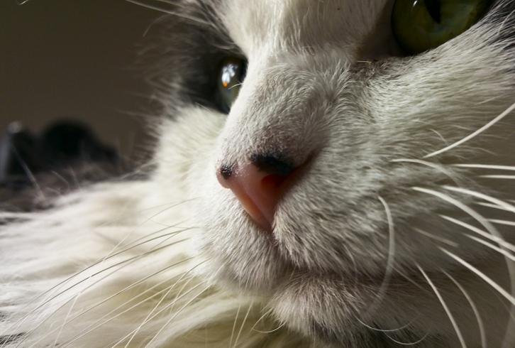 Белый кот с усами
