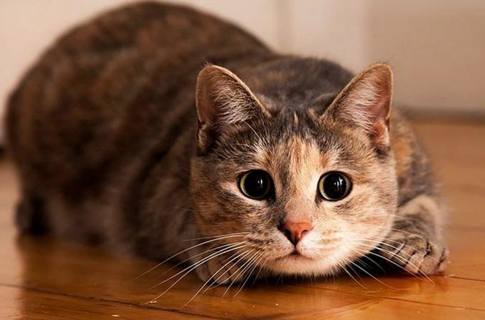 Котик с усиками