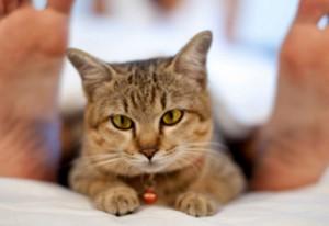 Почему кот не спит ночью