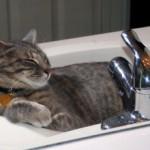 Почему коты любят спать в раковине