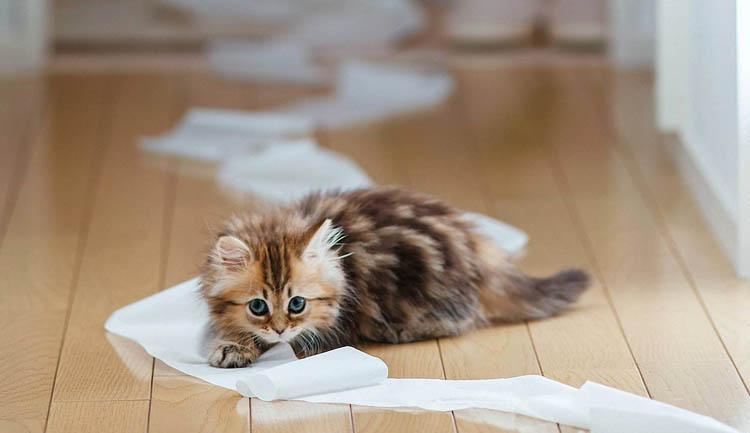 Котенок с недержанием