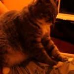 Почему коты топчут лапками своих хозяев