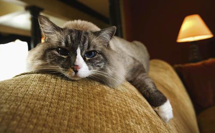 У кота недержание