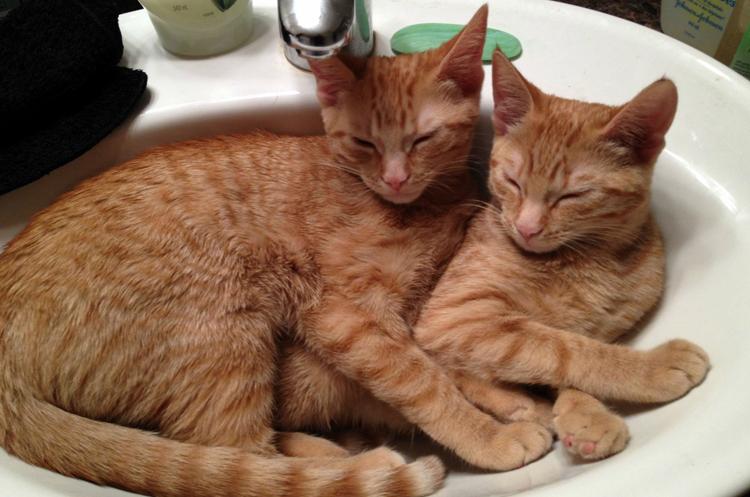 Две сестры спят в раковине