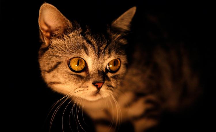 Кот ночью