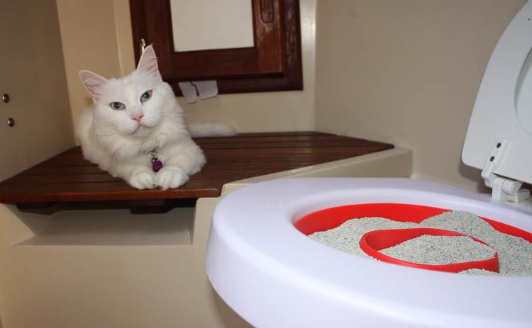 Кошка и туалет