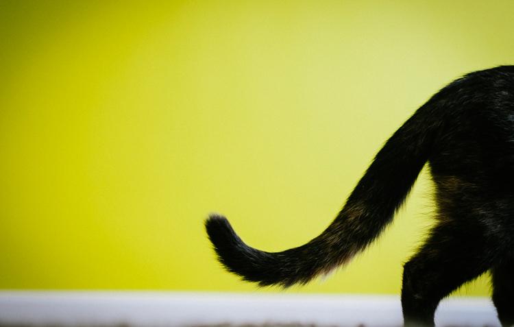Черный хвост кошки