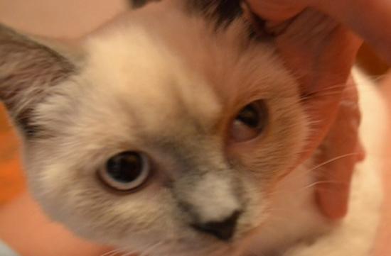 У котенка закис глаз