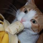 Бананы кошкам: можно ли давать, польза и вред