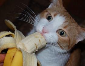 Бананы кошкам