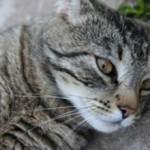 Кровь в кале у кошки: причины и лечение