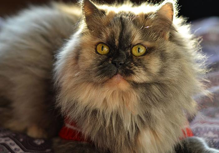 Проблемы с дыханием у кошки