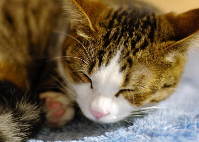 Кошка болеет