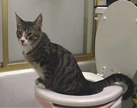 Кот ходит в туалет (писает и какает) с кровью