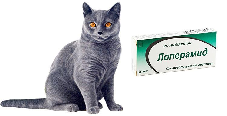 Кот и лоперамид