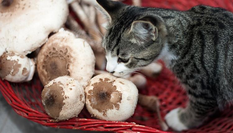 Кошка и грибы