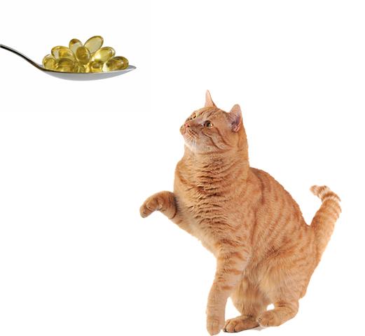 Кошка и рыбий жир