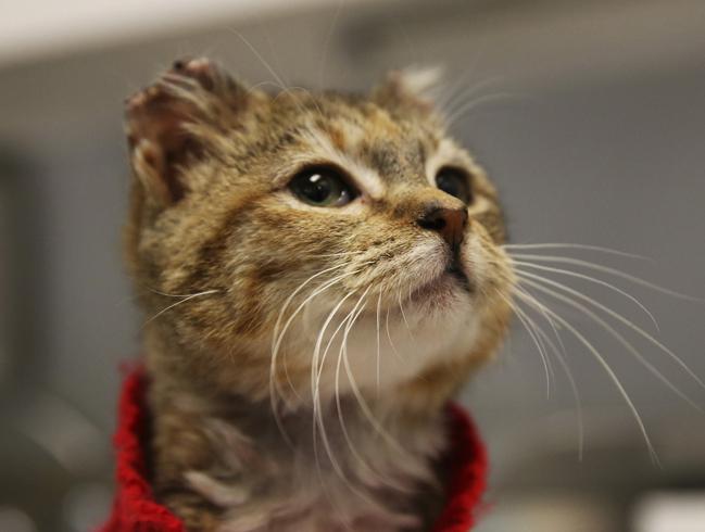 Кошка с замерзшими ушками