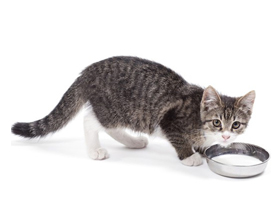 Можно ли давать кошкам ряженку