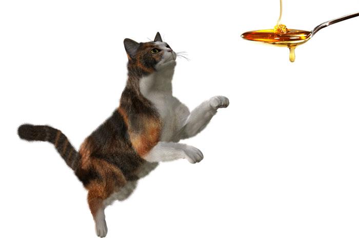 Кошка и мед