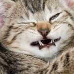 Кот часто чихает — причины и что делать
