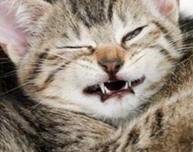 Кот часто чихает