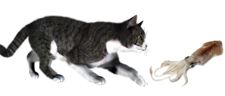 Кошка и кальмар