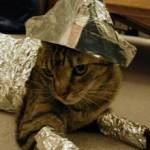 Что делать, если кот съел фольгу?
