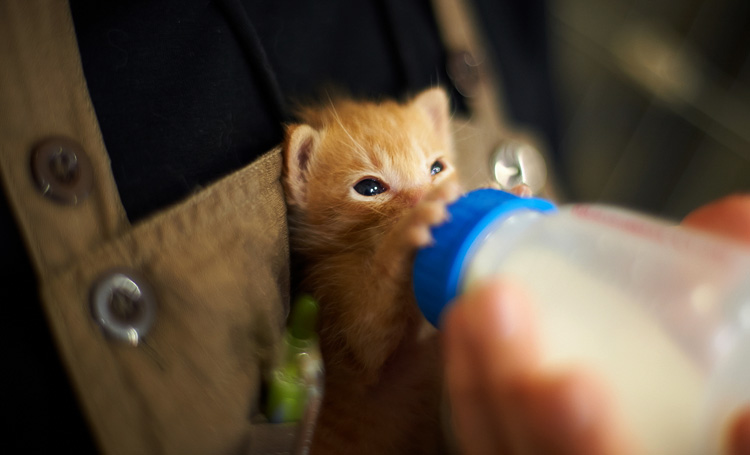 Котенок пьет молочко