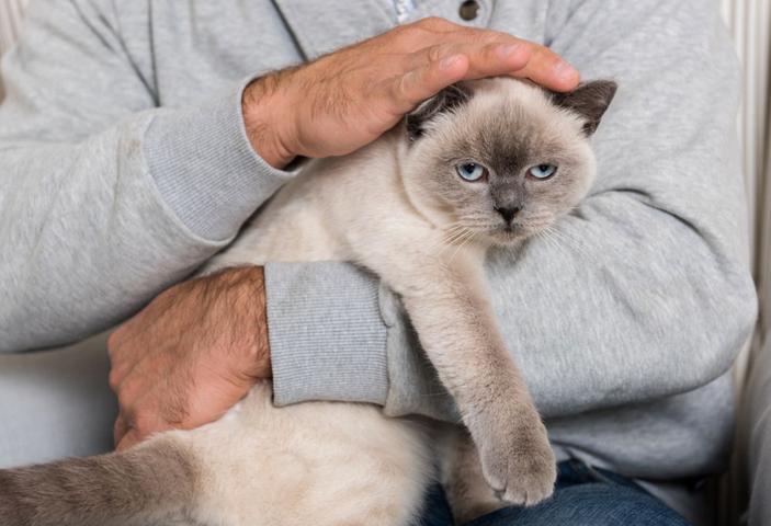 Кот с инсультом у хозяева