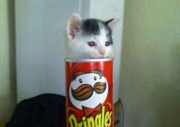 Котенок в чипсах