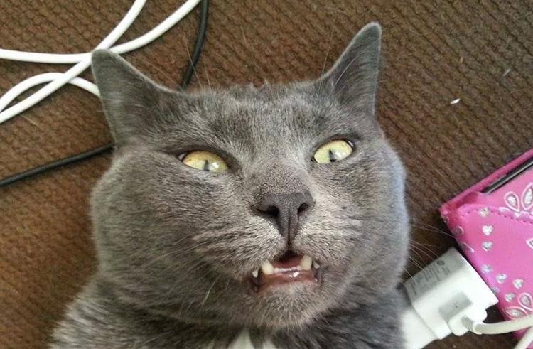 Кот со шнурком