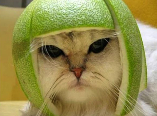 Кот с кожурой
