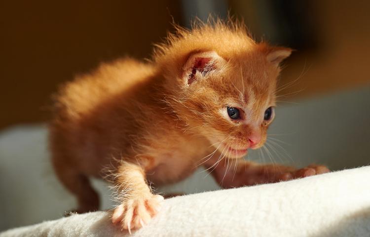 Красивый котенок
