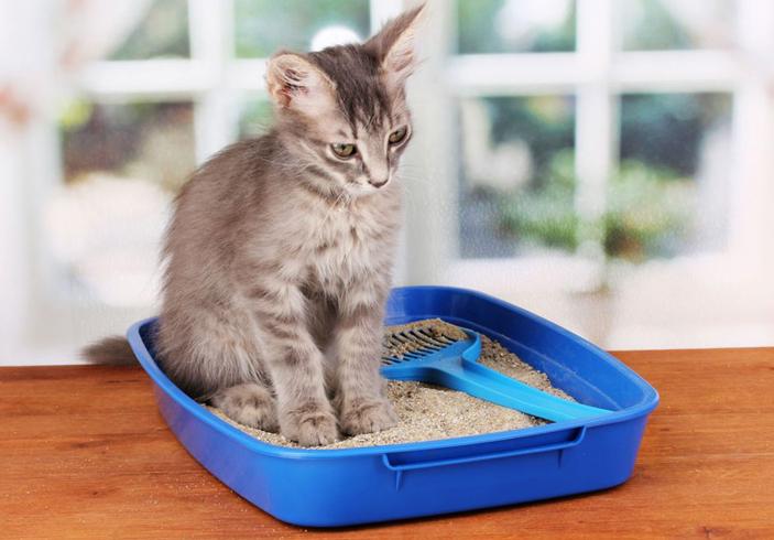 Котенок хочет в таулет