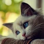 Гастрит у кошек: причины, симптомы, лечение