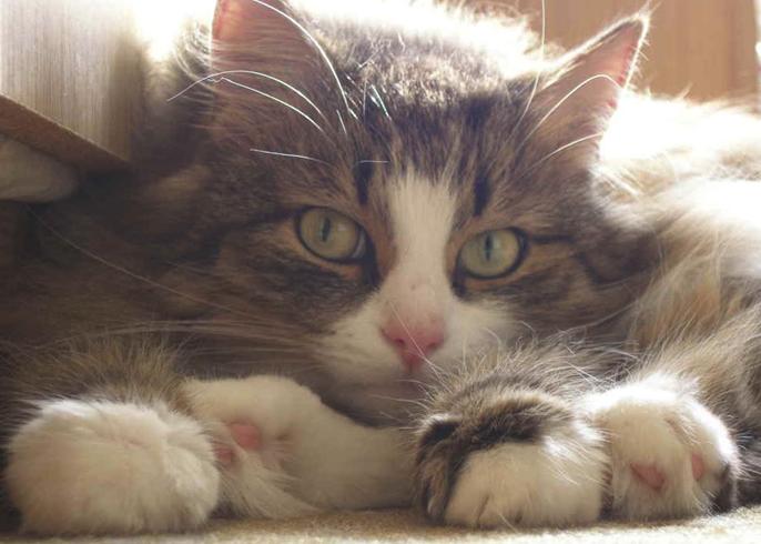 У кошки инсульт