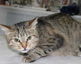 Инсульт у кота